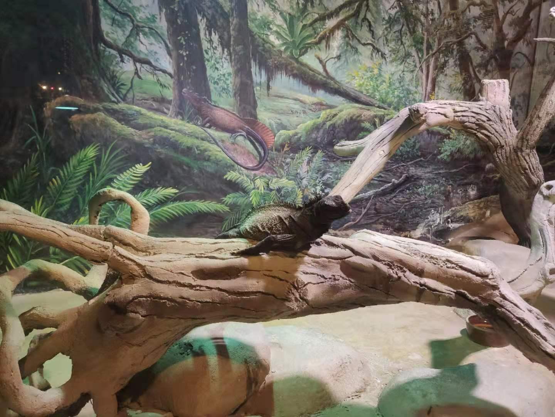 蜥蜴1.jpg