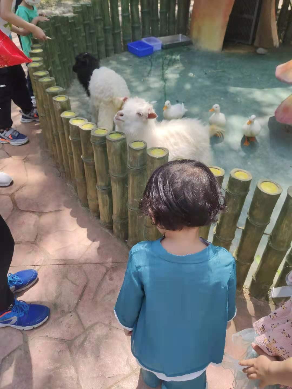 室外羊.jpg