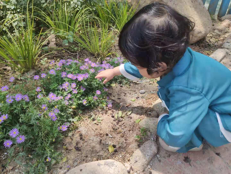室外花.jpg